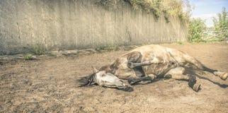 Лошадь лежа в тонизированном песке двора, стоковые изображения rf