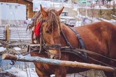 Лошадь деревни залива Переход ` s деревни традиционный - тележка вытянула лошадью Стоковая Фотография RF