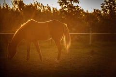 Натренированная лошадь Стоковые Изображения RF