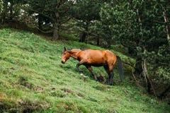 Лошадь есть выгон травы весной Лошадь пася на зеленом m Стоковое Изображение