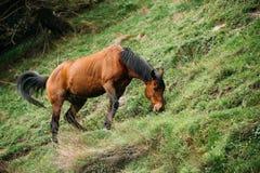 Лошадь есть выгон травы весной Лошадь пася на зеленом m Стоковая Фотография RF