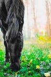 Лошадь есть траву в лесе, отмелый фокус DOF на глазах Стоковые Фотографии RF