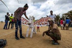 Лошадь летания подготавливает для принимает от пляжа Negombo в Шри-Ланке Стоковые Фото