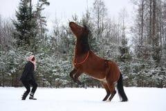 Лошадь залива девушки подростка командующая, который нужно поднять Стоковые Изображения RF