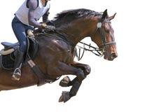 Лошадь залива скача на белую предпосылку Стоковые Изображения