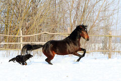 Лошадь играя с собакой Стоковое Изображение
