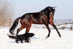 Лошадь играя с собакой Стоковое фото RF