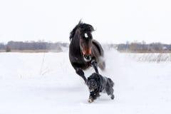 Лошадь играя с собакой Стоковые Изображения RF