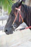 Лошадь имеет отдыхать в расслабляющем времени Стоковое Фото