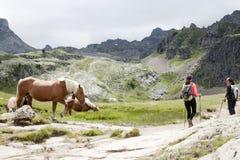 Лошадь и 2 альпиниста в горе Стоковая Фотография RF