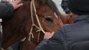 Лошадь и всадники видеоматериал