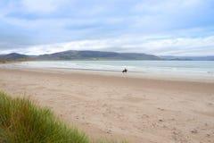 Лошадь и всадник на пляже maharees стоковые фотографии rf