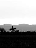 Лошадь и всадник Стоковые Фото