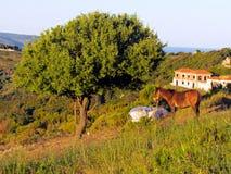 Лошадь и дерево Стоковые Фото