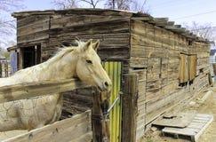 Лошадь и конюшня Стоковые Фотографии RF