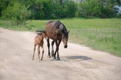 Лошадь и осленок стоковая фотография rf