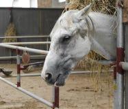 Лошадь и подавать Стоковые Фото