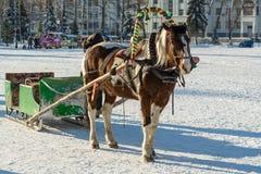 Лошадь и сани в зиме Стоковое Изображение RF