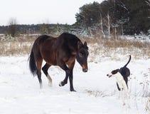 Лошадь и черно-белая собака играя в поле снега в зиме Стоковое Изображение RF