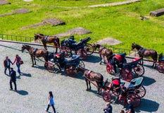 Лошадь и экипажи Стоковые Фото