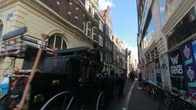 Лошадь и экипаж в Амстердаме сток-видео