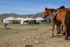 Лошадь и yurts Стоковые Изображения