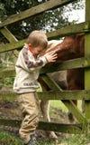 лошадь мальчика немногая Стоковое Фото