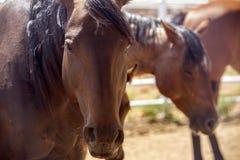 Лошадь 01 матери Стоковые Фотографии RF