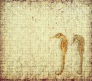 Лошадь моря с текстурой бумаги Стоковое Изображение RF