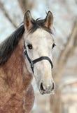 Лошадь на вечере зимы Стоковая Фотография