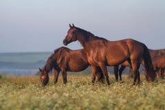 Лошадь на выгоне Стоковые Изображения