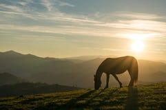 Лошадь на заходе солнца Стоковое Изображение RF