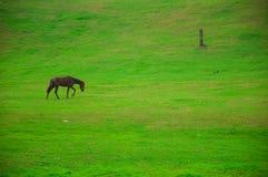 Лошадь на зеленой предпосылке поля Стоковое Изображение RF
