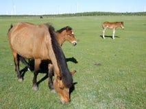 Лошадь на злаковике стоковое фото