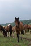 Лошадь на поле Стоковая Фотография RF