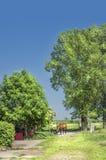 Лошадь на предпосылке деревьев и выгонов Стоковые Фото