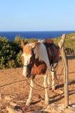 Лошадь на предпосылке моря стоковые фотографии rf