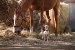 Лошадь на природе Портрет лошади, коричневая лошадь, лошадь стоит в paddock Стоковые Изображения