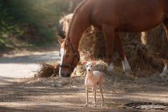 Лошадь на природе Портрет лошади, коричневая лошадь, лошадь стоит в paddock Стоковая Фотография RF