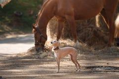 Лошадь на природе Портрет лошади, коричневая лошадь, лошадь стоит в paddock Стоковые Фотографии RF