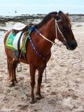 Лошадь на пляже huahin в утре Стоковое Изображение RF
