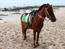 Лошадь на пляже huahin в утре Стоковые Изображения