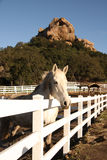 Лошадь на ранчо в Калифорнии Стоковые Фотографии RF