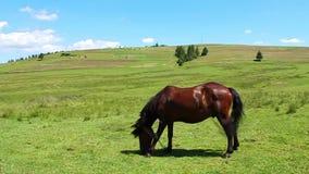 Лошадь на луге видеоматериал