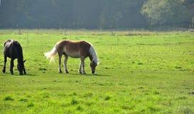 Лошадь на лужке Стоковое фото RF