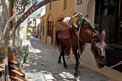 Лошадь на узкой улице средневекового городка Monemvasia Стоковые Изображения RF