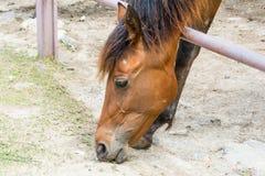 Лошадь на ферме Стоковое Фото