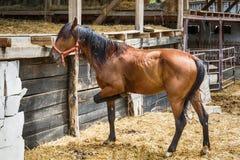 Лошадь на ферме Стоковые Фотографии RF