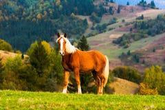 Лошадь на холмах гор Стоковые Изображения