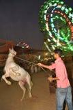 лошадь новая Стоковое Изображение